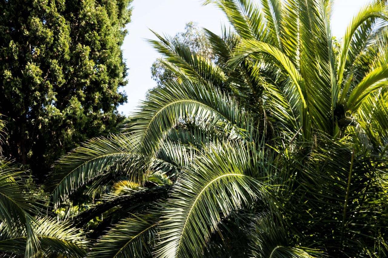 Hôtel Tahiti Beach - Jardin